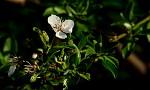 Květy jara II