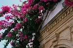Řecko,  tato  kytka  se mi  líbí
