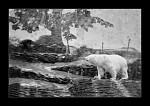 Krajinou ledních medvědů