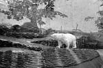S medvědem a deštěm
