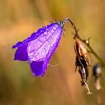 Podzimní květ