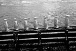 Tučňáci na Vltavě