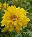 Květina s dobrodružným dějem...:-)