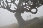 Vavřínový les - Madeira