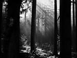 Boubínské lesy