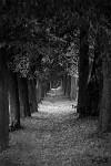 Tichou procházkou...