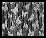 Jedna motýlí