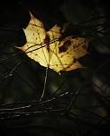 S láskou Tobě, Podzime...