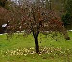 dvoubarevná náplň do štrůdlu