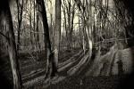 strašídelný lesík  ? ČB 3