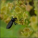 hmyzák I