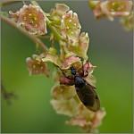hmyzák II