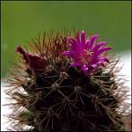 muj kaktusek