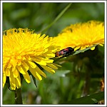 jedna z říše hmyzu