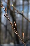 čekání  na jaro