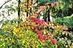 Listopadová /chaotická/paleta barev