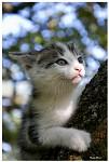 Tigr na stromě
