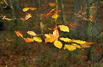 Podzimní barvy