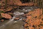 Zlaté listí na Doubravě
