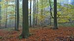 Mlhy podzimu