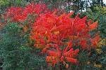 Barvy října