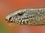 Had z naší zahrádky