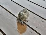 Ptáčátko v dešti