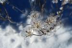 Ledové kvítky