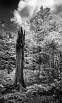 Z hlubokého lesa