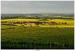 Nový Šaldorf - vinice