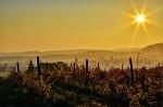 Vinice na podzim -   Zobrazení: 14489