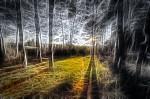 Halucinace v lese
