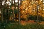 Podzim leze do lesa
