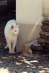 Protřelá městská kočka