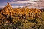 Listopadová vinice