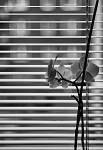 Květina v okně