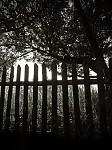 Co se skrývá za plotem?