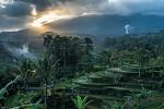 Rýžové terasy Jatiluwih