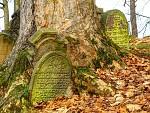 nový židovský hřbitov 3