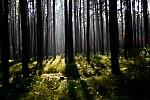 les v protsvětle