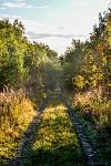 Cesta do lesa