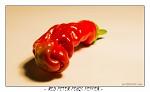 Red Peter Penis Pepper