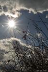 Slunko a šípky