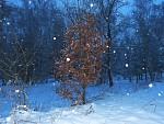 záchvěv zimy