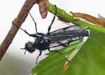 Hmyz II