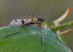 Hmyz I