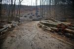 Moderné lesné 'hospodárstvo' na slovensku