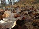 Podzim v zimě