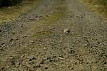 Zkroušený a osamělý na cestách