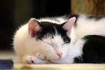 Nedělní siesta před krbem